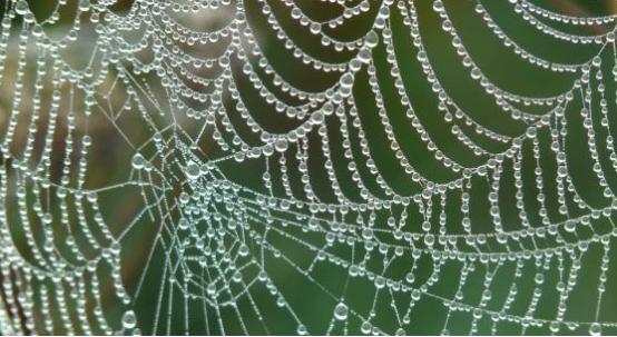 蜘蛛丝有望成为机器人肌肉的组成部分