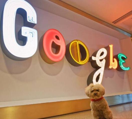 Google的Lookout应用程序更新添加了语言和更易于访问的设计